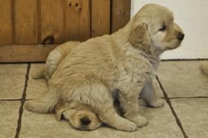 dog-sit-funny
